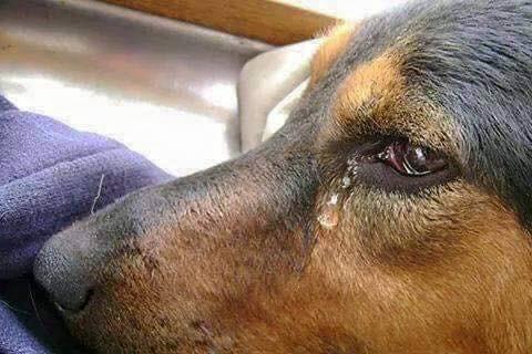Който не обича животните,той не обича и хората….