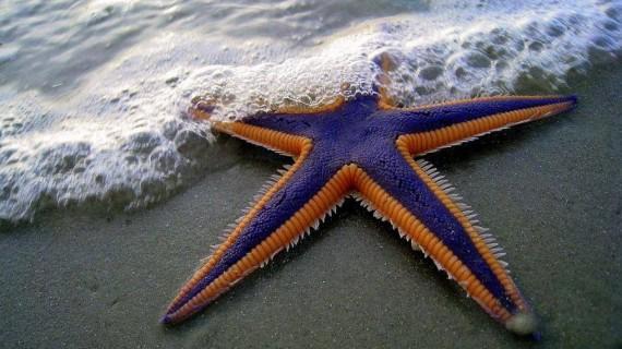 Приказка за Детето и Морската звезда!