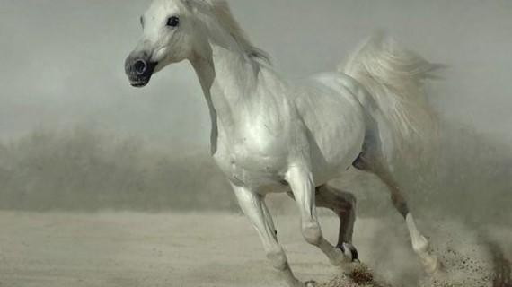 Притча за Белия кон