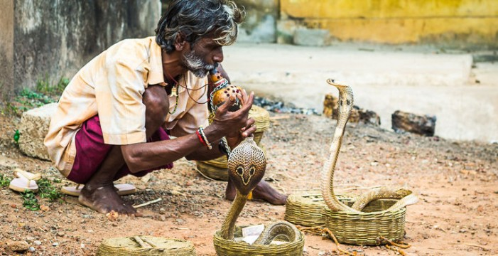Притча за факирът и кобрата
