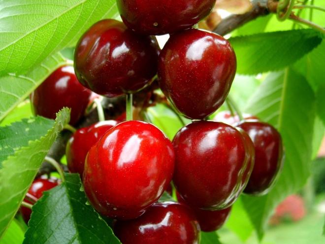 Cherry_fruit