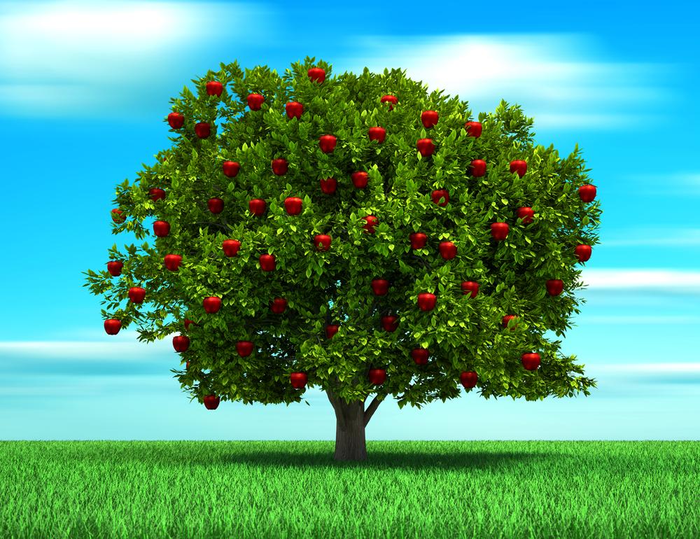 for Arbol con raices y frutos