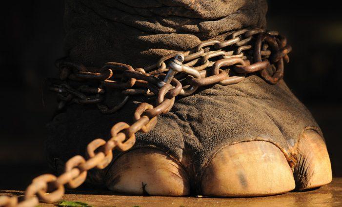 "Хорхе Букай ""Окованият слон"""