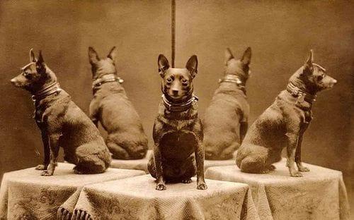 Кучето и огледалото