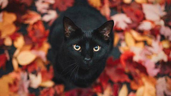 Притча за котката